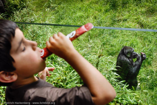 Evolution - Essender Junge vor Affe im Freilaufgehege eines Zoos - Foto © Dietrich Hackenberg